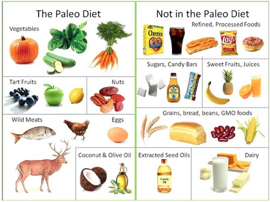 paleo diet theory what to eat?